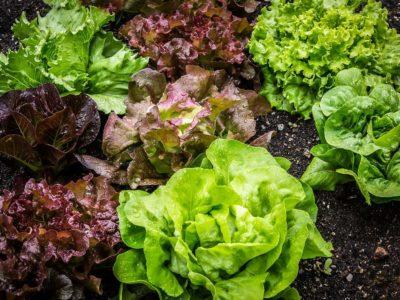 Et si manger des feuilles vertes était beaucoup plus IMPORTANT qu'on ne le pense…